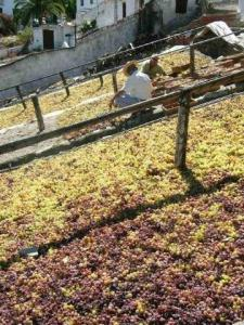 grape drying in cutar