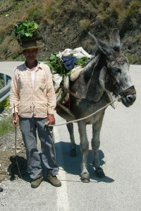 Man and donkey with their dinner