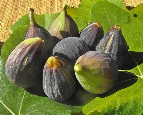 blog figs