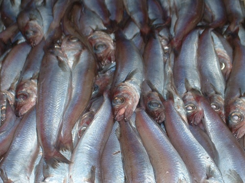 Bacaladilla (blue whiting) now appearing on the slabs of the fishmongers of Velez Malaga
