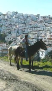Worker on Donkey Almachar