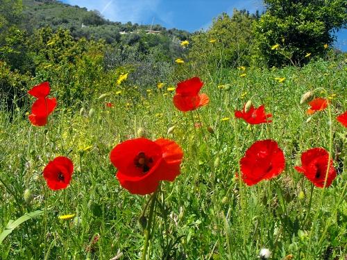 La Axarquia. Spring flowers