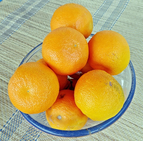 Sevlle oranges, organic, freshly picked and in perfect condition