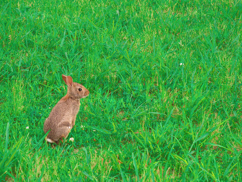 Wild Jack Rabbit Bunny