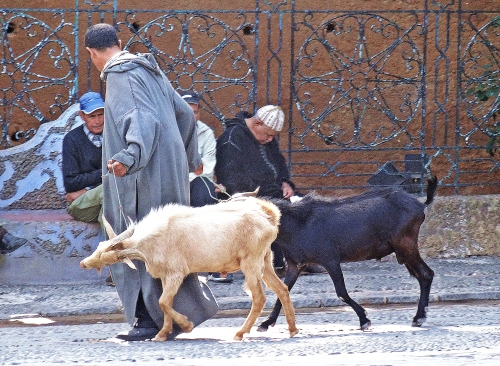 Goat trading inthe main square