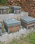 These traditional Spanish hives are propped up on clinker blocks to keep out the damp. To take the honey, smoke the hive and lift the lid, taking the out er frames
